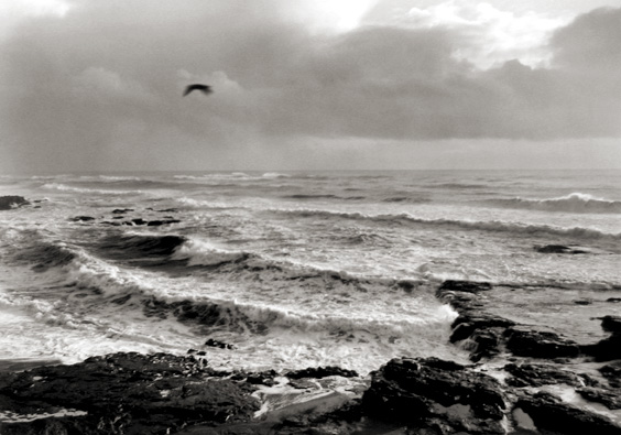 Surf and Bird, Yachats, Oregon 1995 gelatin silver print