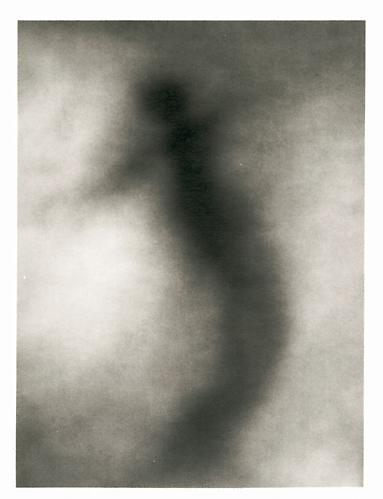 JOHN BRILL Discarnate, 1999  Selenium-toned silver print, 19 ¼ x 17 ¼ in. Edition 2 of 10