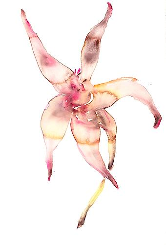 Pink Flower (2012) Watercolor On Paper 22h x 15w in (55.88h x 38.1w cm)