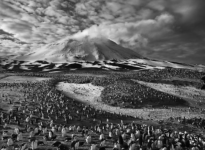 Macaroni Penguins in Zavodovski Island, The Sandwich Islands 2009 gelatin silver print