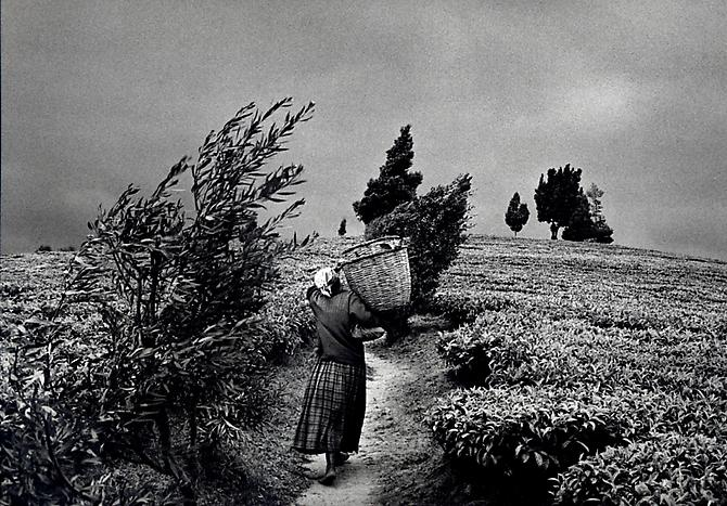 In the hills of Moko at the Gisovo tea plantation, Rwanda 1991 gelatin silver print