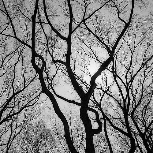 Branch Silhouette III, New York City 2005