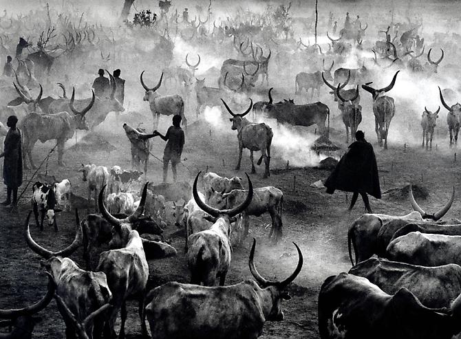 Southern Sudan [Dinka cattle camp of Amak at the end of the day when the herd is back in the camp for the night.  This is the most active time in the camp] 2006 gelatin silver print
