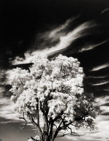 Tree and Clouds, Rochester, New York, Portfolio One 1958 gelatin silver print