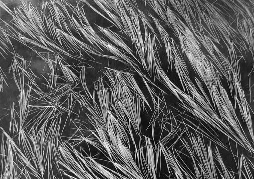Grass and Water, Mt. Baker, Washington 1962 gelatin silver print