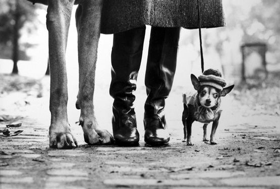 New York [dog & boots] 1955