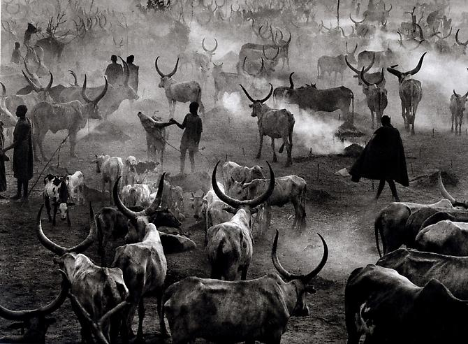 Dinka Cattle Camp at the End of the Day 2006