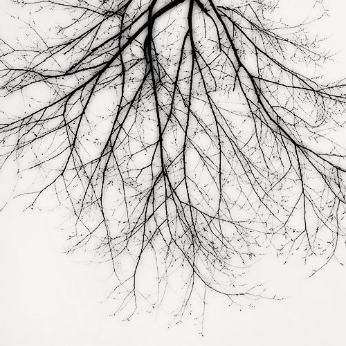 Branch Silhouette, New York City 2010