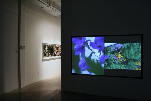 CHERYL PAGUREK | GROWING PAINS | TWO-CHANNEL VIDEO | INSTALLATION VIEW | PATRICK MIKHAIL GALLERY | 2010