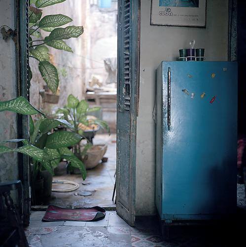 OLGA CHAGAOUTDINOVA | PLANTS AND FRIDGE | C-PRINT | 61 x 61 CENTIMETERS | 2007
