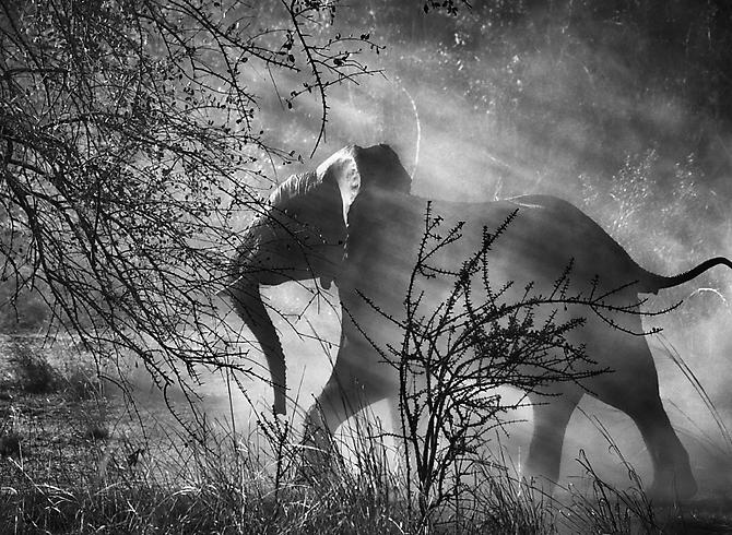 Kafue National Park, Zambia [elephant] 2010
