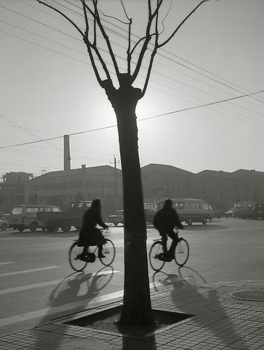 Bicyclists and Bare Tree, Beijing 1989 gelatin silver print