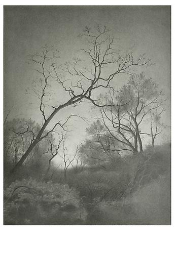 Brooklyn Woods II, 2010 Graphite on paper 23 1/2 x 18 inches