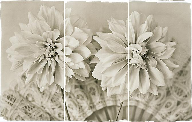 Lace Dahlias II 2011 Platinum/Palladium
