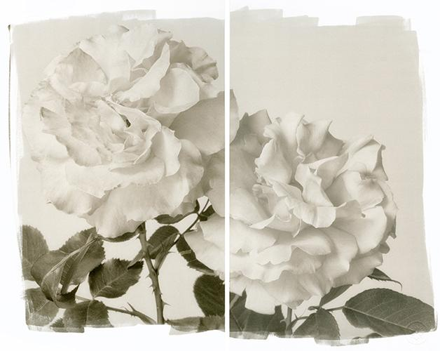 Two Roses 2011 Platinum/Palladium