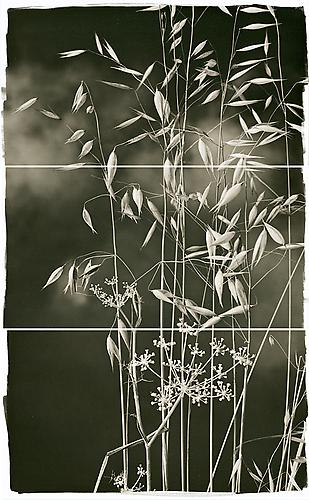 Valley Grasses I 2011 Platinum Palladium