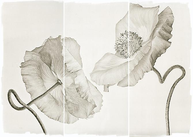 Wedding Poppies 2011 Platinum Palladium
