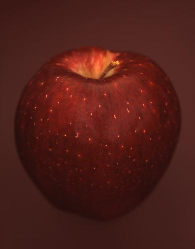 Malus Domestica 'Red Delicious' 2007 pigment print