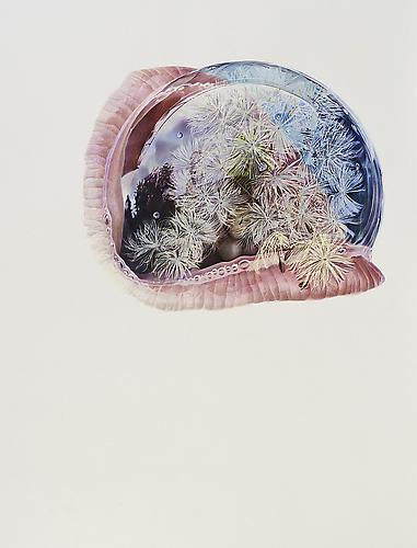 Dandelion, 2012 Colored pencil on paper 60 x 45 inches
