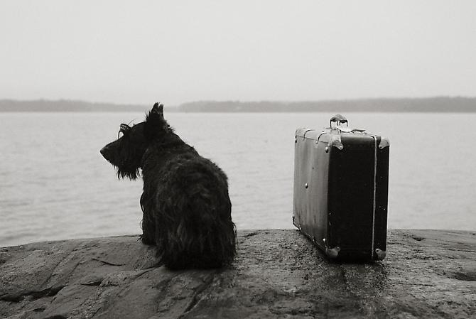 Dog with Suitcase 1982 gelatin silver print