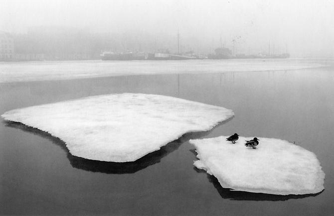 Helsinki, Finland (Two Ducks on Ice) 1973 Gelatin Silver Print
