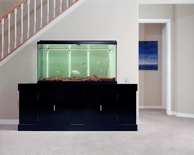 Angela Strassheim,  Untitled (Fish Tank) , 2005 Archival pigment ink print 40 x 50 inches Edition of 8