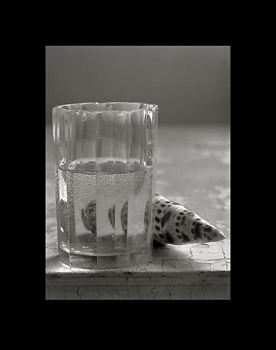 Glass and Shell 1999 gelatin silver print