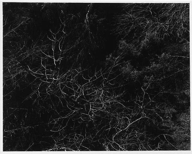 Harry Callahan  Tree tops and Twings , photograph 7.38 x 9.25 inches Listing #20
