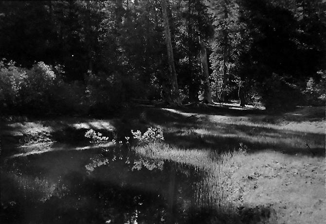 Forest at Benson Lake, Yosemite National Park 1950 gelatin silver print