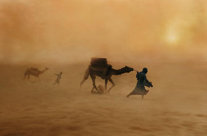 Steve McCurry Camels in Dust Storm, India 2010