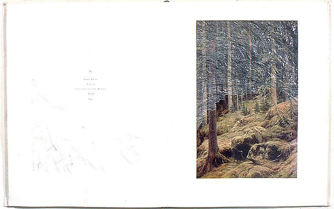Dense Forest , 2002, paper, 25.7 x 17.75 x 3 inches