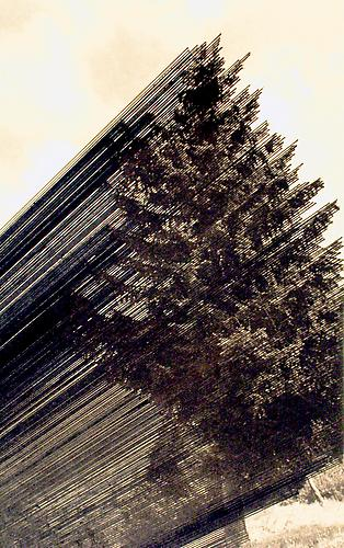 Tree By the Road , 2004, eroded book page, 11 x 8.5 inches (image); 14.5 x 12 inches (framed)