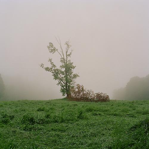 Crow's Field, 2011 from 'Know Me For the First Time' pigment print