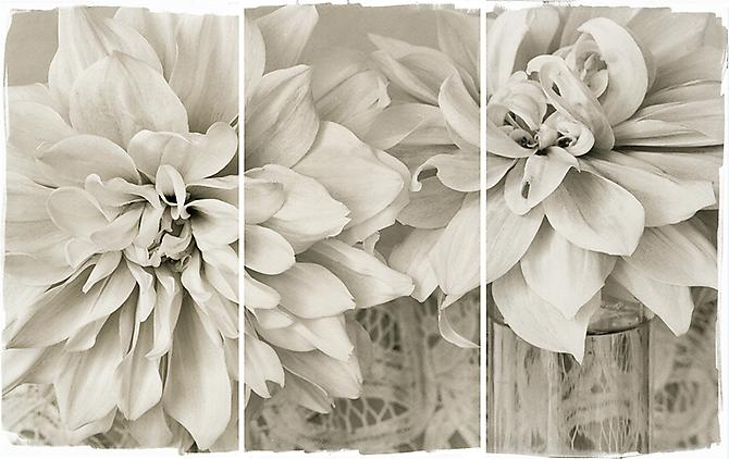 Lace Dahlias I 2011 Platinum Palladium