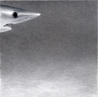 Blue Shark , 2005, pencil on Yupo, 8 x 8 inches