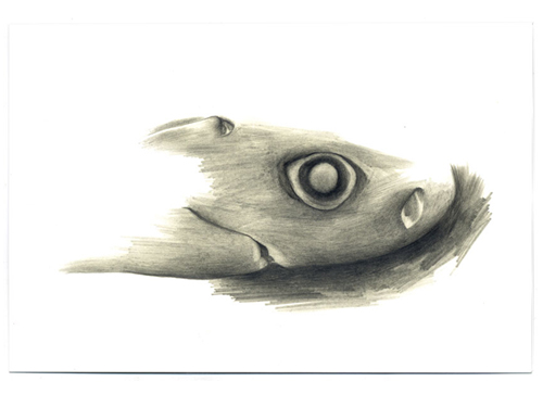 Cookiecutter Shark , 2005, pencil on Yupo, 4 x 6 inches