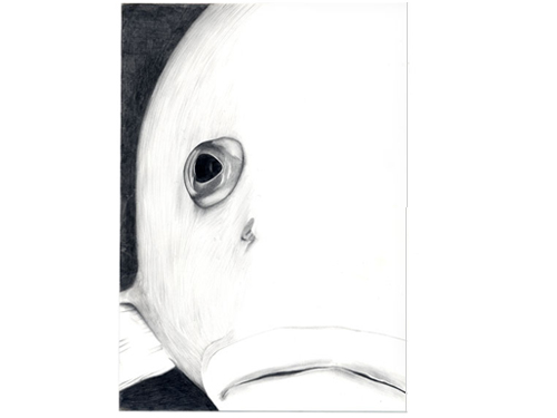 Grouper , 2005, pencil on Yupo, 7 x 5 inches