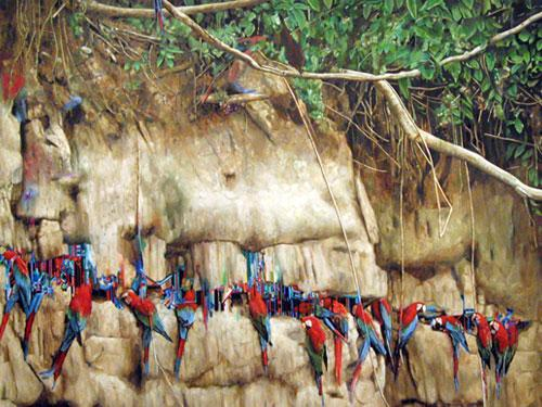 Macaws , 2006, oil on linen, 50 x 70 inches