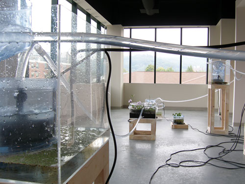 Managed Flow Echo Systems , 2005, site-specific installation, Turchin Center for the Arts, ASU, North Carolina, water, plastic tubing, pumps, containers found on site, aquatic plants, PVC pipe, electrical cords, mirror, sink found on site, dimensions vary commission