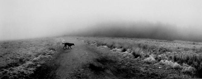 Llanwuno, Wales (Dog Crossing Dirt Road) 1995 Gelatin Silver Print