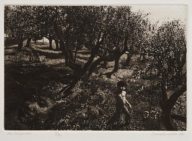 "David Bumbeck, 1980  The Olive Grove , print 8"" x 11.5"""