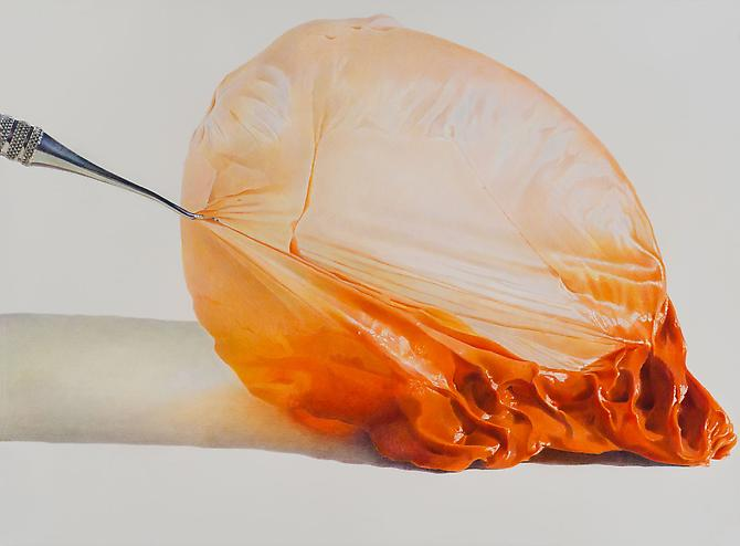 Pulled Orange Crush, 2013 colored pencil on paper 22 x 30 inches