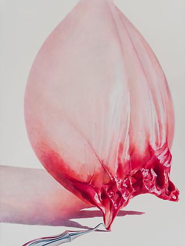 Pulled Raspberry, 2013 colored pencil on paper 30 x 22 inches