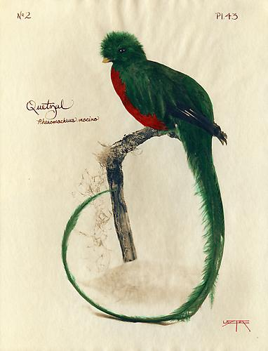 Quetzal  2003 toned cyanotype with hand coloring