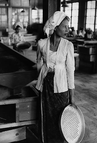 Tea worker, Indonesia  1957 Silver Gelatin Print