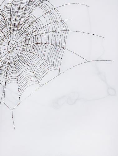 "Spider Web, 2011 Glass beads and thread on vellum 21"" x 27"""