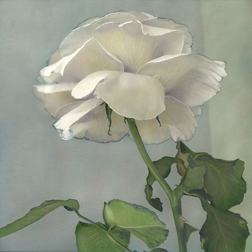 Tea Rose II 1997 Hand painted gelatin silver print