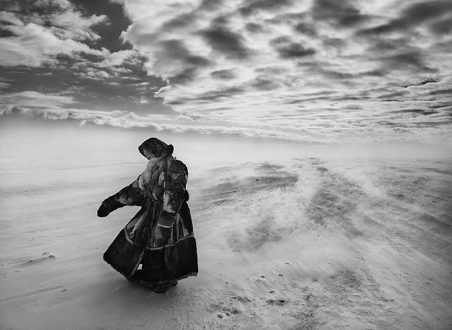 When temperatures fall sharply and fierce winds blow, the Nenets and their reindeer may spend several days in the same place until milder weather allows them to continue their migration. gelatin silver print
