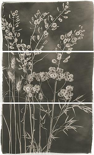 Valley Grasses V 2012 Platinum Palladium