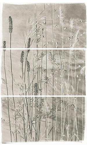 Valley Grasses VI 2012 Platinum Palladium